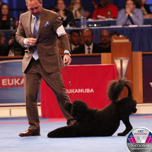 Photo courtesy of Eukanuba