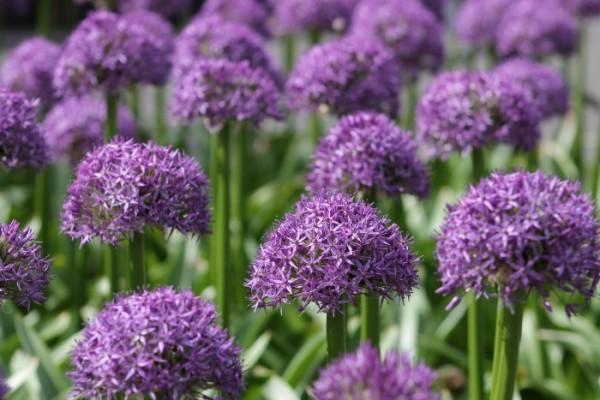 public garden flowers