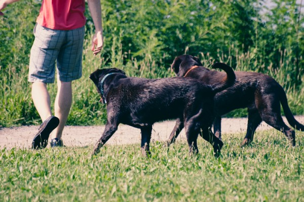 Dogs play outdoor
