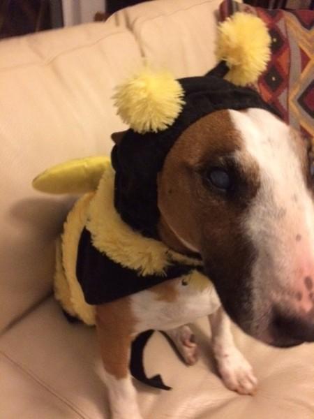 dog costume Halloween