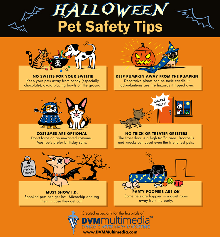 Halloween pet safety tips - Champagne Living