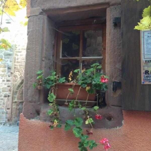 window box Riquewihr