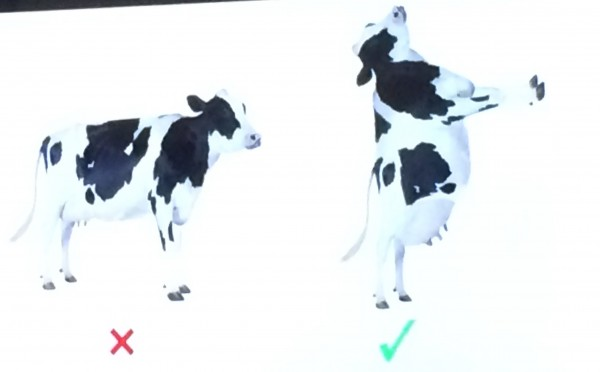 The process of putting a 4-legged cow on 2 legs.