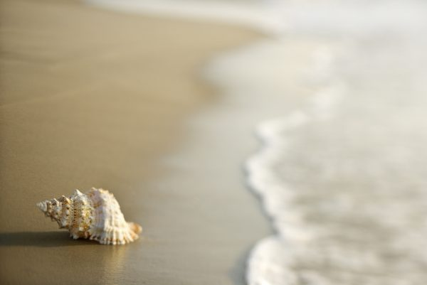 Conch shell on sand.