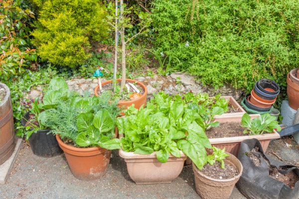 Don't forget the ultimate DIY & plant your own veggies for your outdoor kitchen.