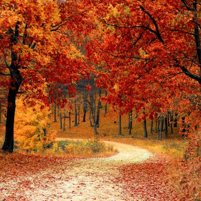 It's Almost Leaf Peeping Season; Where to See the Best Fall Foliage This Year