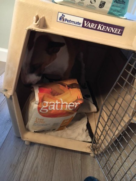 Sneaking a bag into my crate