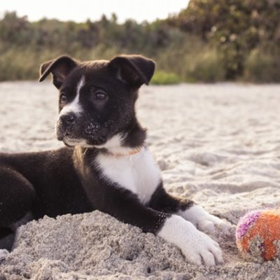 Just You and the Pooch—Five Dog-Friendly Vacations