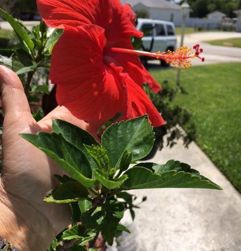 I Don't Kill My Plants Anymore! (But I do Kill Stains)