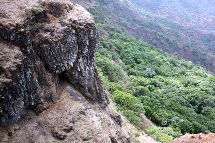 Explore the Evergreen Forest of Mahabaleshwar