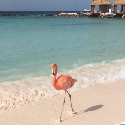 5 things you MUST do in Aruba