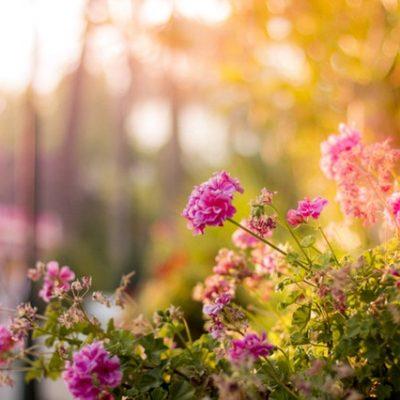 Garden Ideas for All Outdoor Spaces