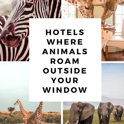 7 Hotels where animals roam right outside your window