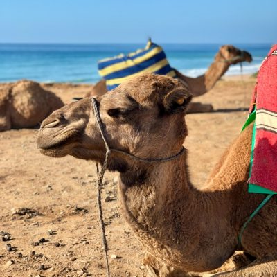 An Exotic Adventure in Morocco