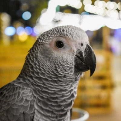 Exotic Pets: Because Dogs And Cats Are Bit Boring