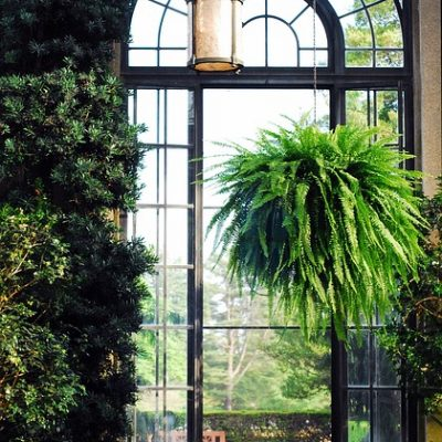 Light Inspiration For Your Conservatory