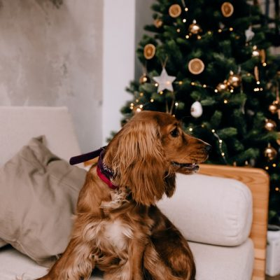 Five Tips To Keep Your Pet Safe At Christmas