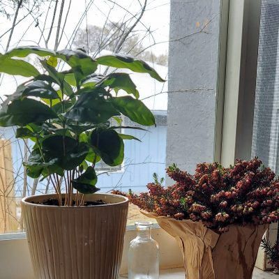 Creating a Home of House Plants