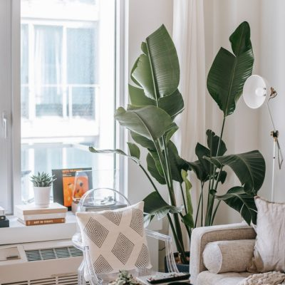 Allergy Sufferer? Here's How to Keep Your Home Allergen-Free!'